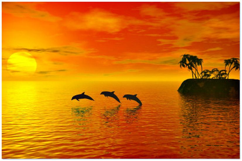 Orange dolphins
