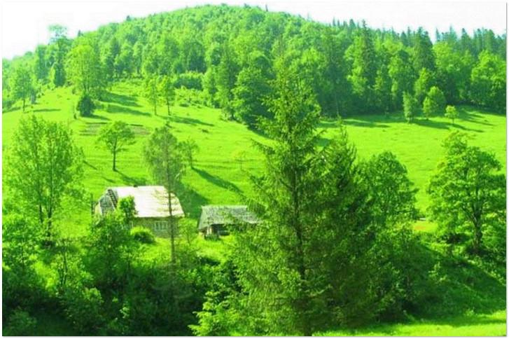 цветотерапия лесом