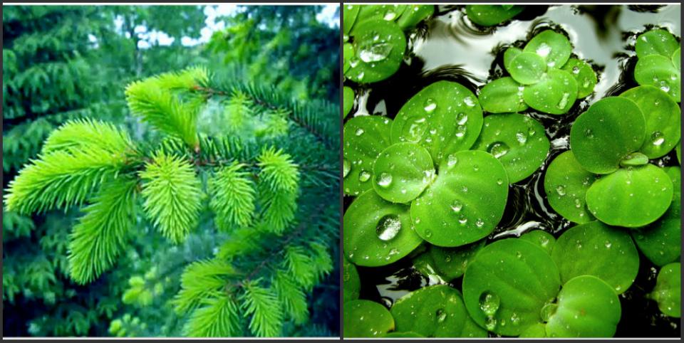 цветотерапия зеленым