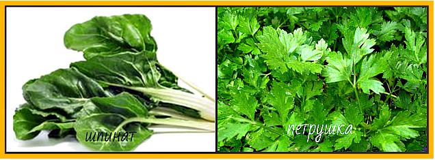 шпинат и петрушка