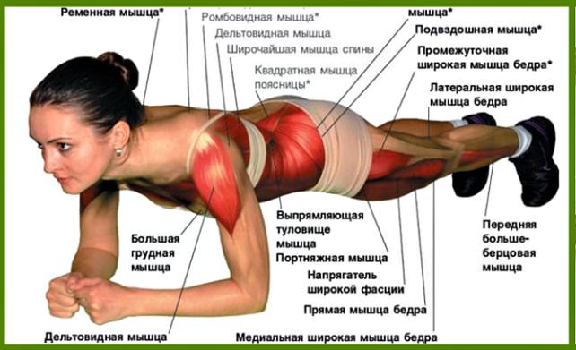 какие мышцы работают в планке на локтях