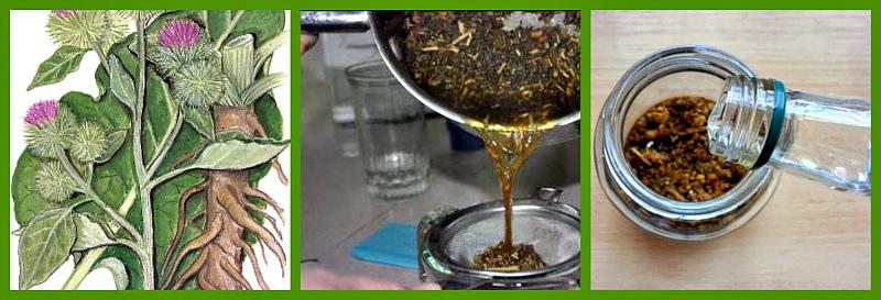Как приготовить мазь из корней лопуха в домашних условиях