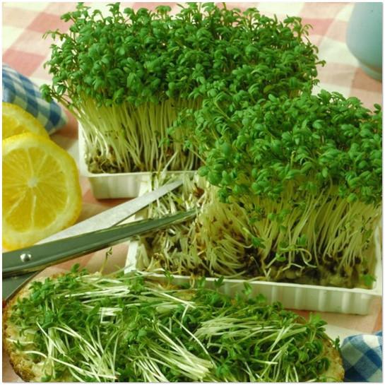 целебные свойства кресс салата