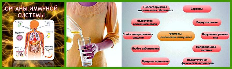 immunnaya-sistema