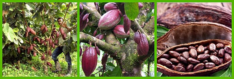sbor-bobov-kakao