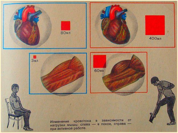Тренируя тело, мы тренируем сердце1