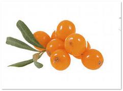 плоды сибирского ананаса