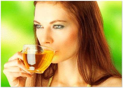 Чайный гриб полезные свойства и вред