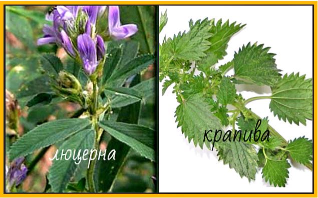 природные источники хлорофилла