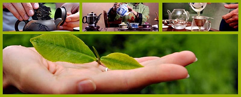 как не следует заваривать зеленый чай