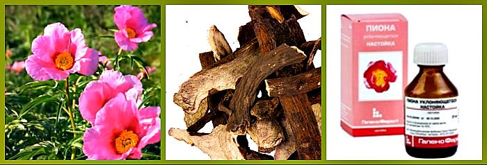 лечебные свойства марьина корня