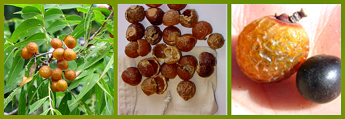 мыльные орехи мукоросси