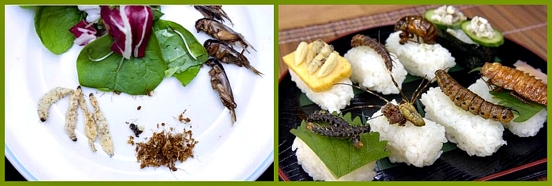 польза насекомых