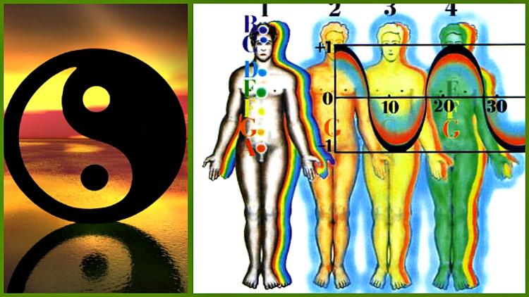 bioritmy-organizma