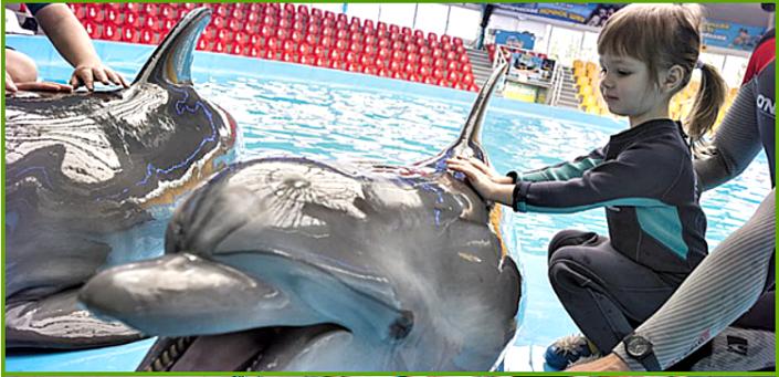 igry-s-delfinami