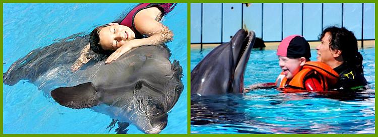 obshhenie-s-delfinam