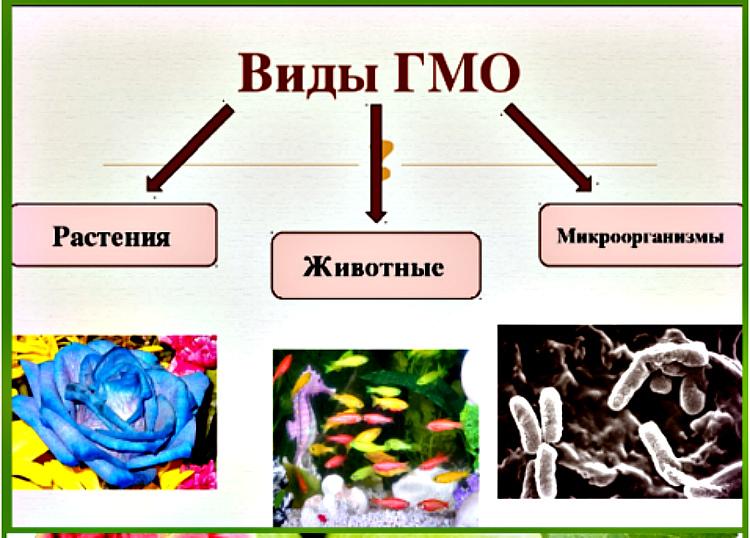 vidy-GMO