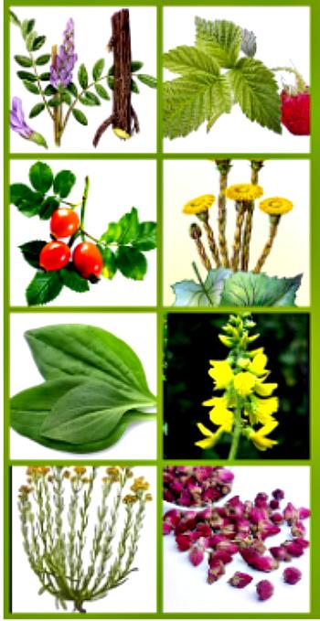 сбор растений