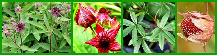 листья, цветок, плод