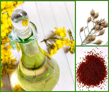 Рыжиковое масло - полезные свойства и рецепты применения