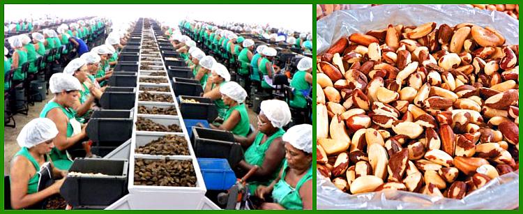 обработка и чистка ореха