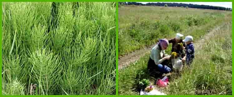 сбор травы