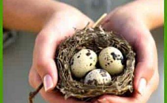 яйца в ладошках