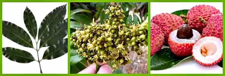 листья цветы плоды