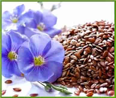Как принимать льняное семя в лечебных целях