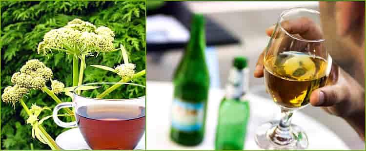лечение алкоголизма любистоком