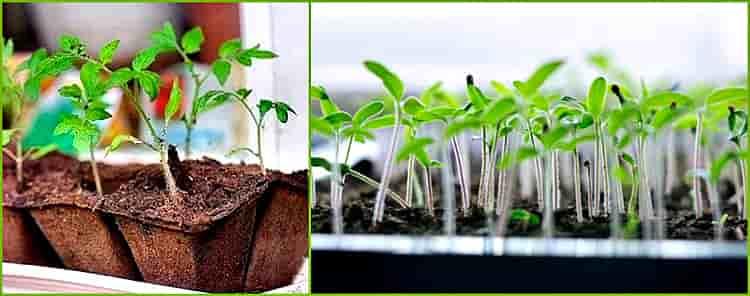 как сажать семена в грунт