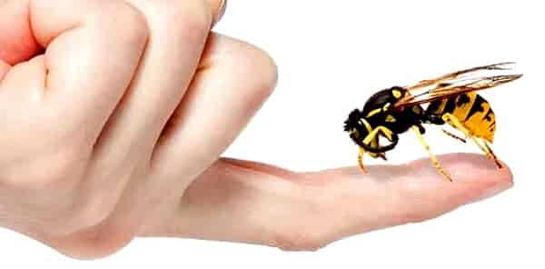 лечение укусами пчел