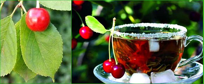 чай из листьев черешни