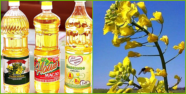 виды рапсового масла