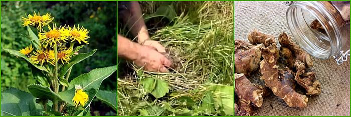 заготовка корней
