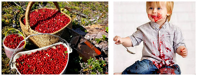 полезные свойства ягоды