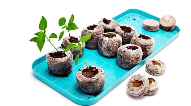 выращивание в таблетках
