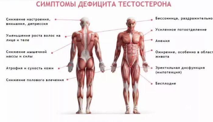 Тестостерон у женщин: повышен или понижен, на что влияет